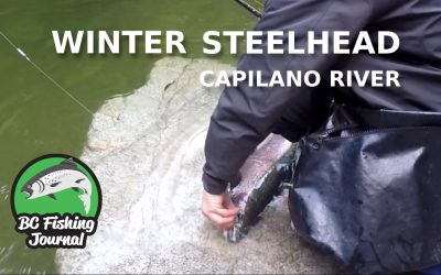 Capilano River Winter Steelhead