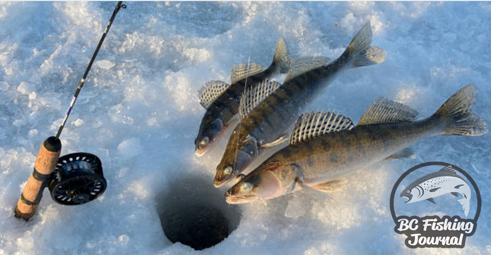Best Ice Fishing Rods and Tip Ups - BC Fishing Journal