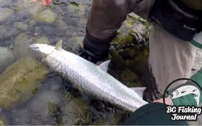 Bead Fishing for Winter Steelhead in Low Clear Water